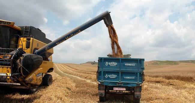 Buğdayda son 77 yılın en yüksek rekoltesi bekleniyor