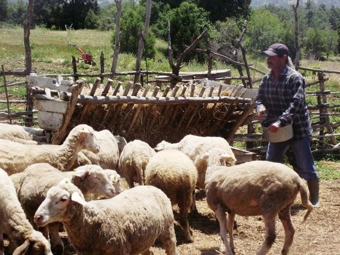 Okuduğu Romanla Hayatı Değişti, Çoban Olmaya Karar Verdi