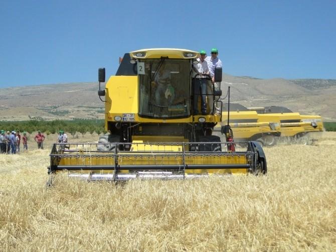 Tohumluk Arpa Ve Buğday Hasadı Başladı
