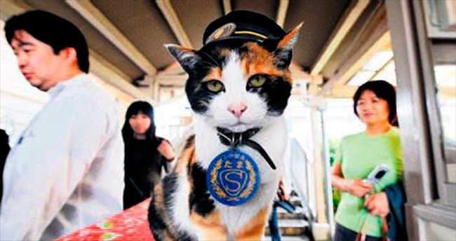 Ünlü kedi 'Tama' kalp krizi kurbanı