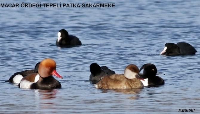 Hersek Gölü'nde 180 Kuş Türü Tespit Edildi