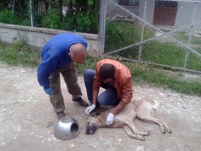 Bolu'da Köpeğe Çin İşkencesi