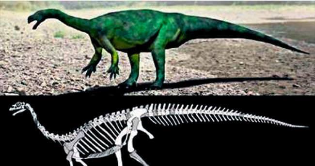 Güney Afrika'da yeni bir dinozor keşfedildi