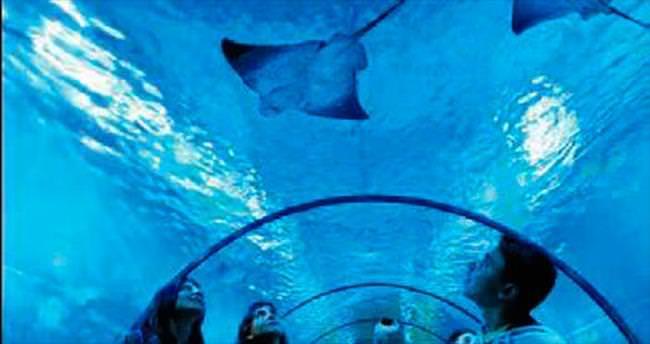 Deniz dünyasına 1 milyon ziyaret