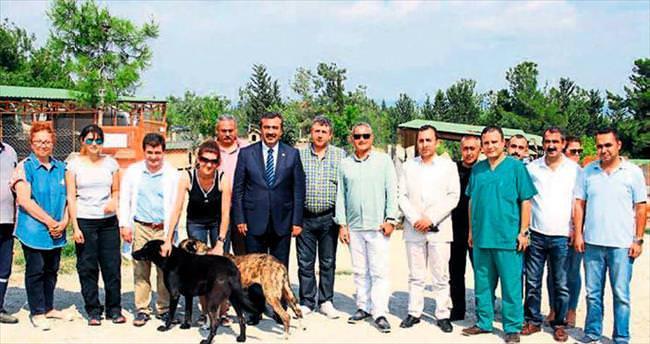 Çukurova'da köpekleri mikroçiple takip başladı
