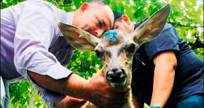 İyileşen geyik doğaya salındı