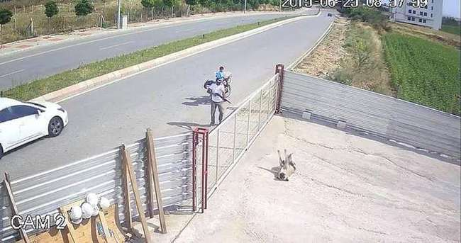 Köpeği öldüren adama 1002 lira para cezası