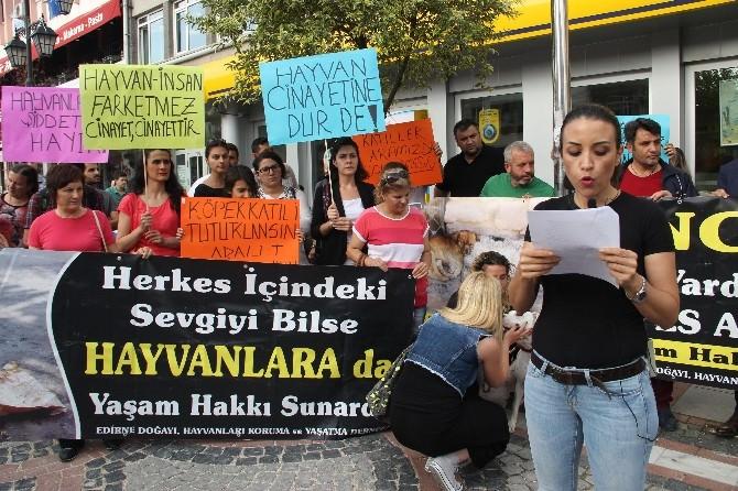 Edirne'de Pompalı Tüfekle Köpek Vahşetine Tepkiler Büyüyor