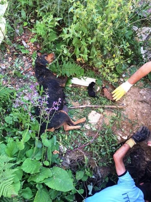 Çukurda Mahsur Kalan Köpek Ve Yavruları Kurtarıldı