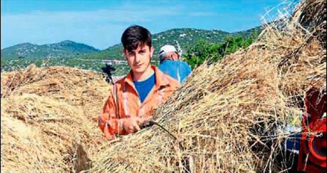 Alanyalı üretici arpa ve buğdaydan vazgeçti