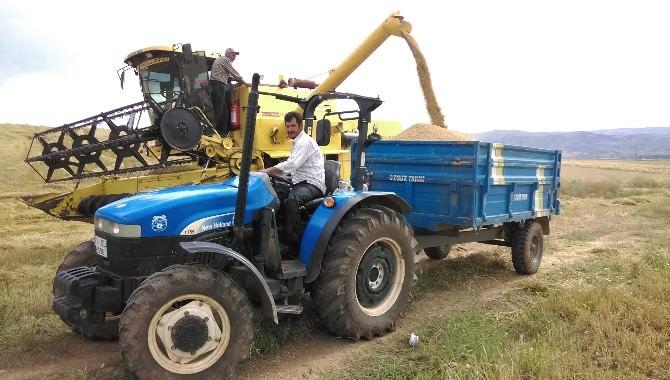 Kırıkkale'de Arpa Ve Buğday Hasadına Başlandı