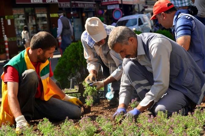 Diyarbakır'da 6 Ayda 600 Bin Mevsimlik Çiçek Ekildi
