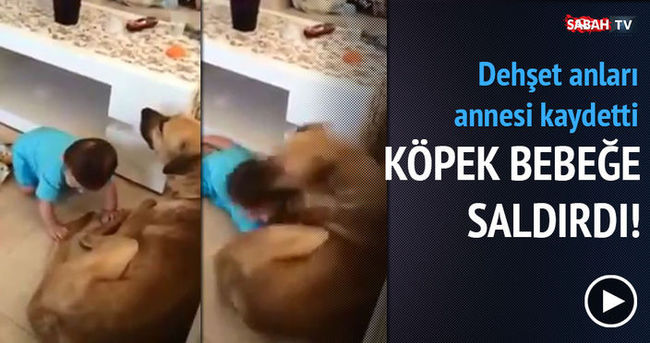 Köpek bebeğe böyle saldırdı!