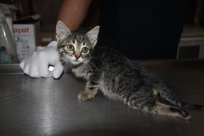 Yaralı Kediyi Harçlıklarıyla Veterinere Götürdüler