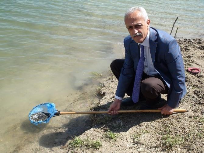 Yozgat'ta Baraj Ve 6 Gölete 100 Bin Yavru Balık Bırakıldı
