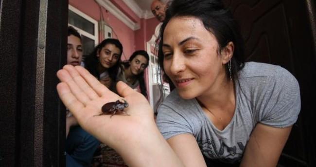 Balkonunda servet değerinde böcek buldu!