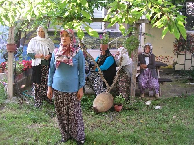 Bilecik Yenipazar'da Orman İşçileri Ayaklandı