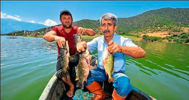 Mısır tarlasında balık tutulacak