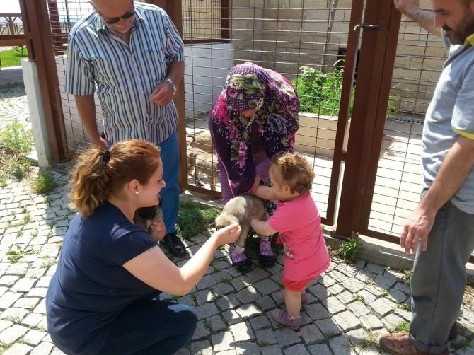 Hayvan Bakımevi Ramazan'da Ziyarete Açık