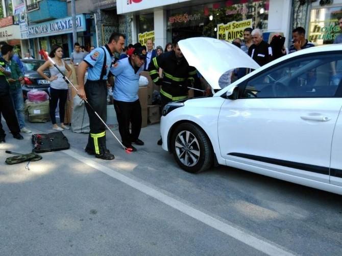 Kütahya'da Otomobilin Motoruna Giren Yılanı Kurtarma Operasyonu