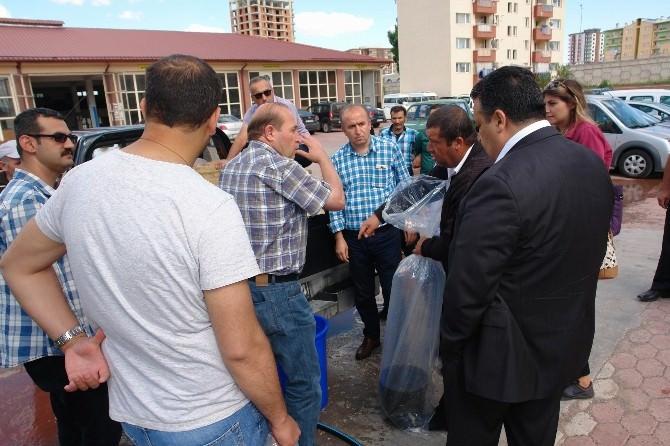 Sivas'ta Göl Ve Göletlere 223 Bin Sazan Balığı Bırakıldı