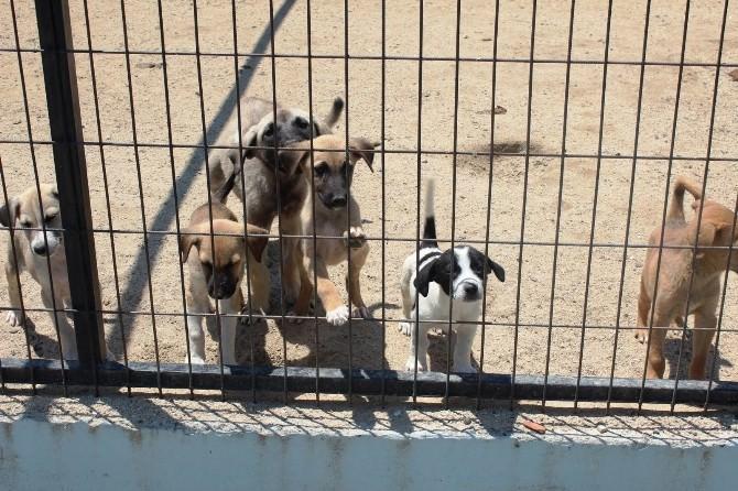 Tekirdağlılar Sokak Hayvanlarına Sahip Çıkıyor