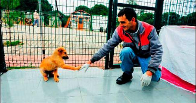 Sokak hayvanlarına özel ilgi
