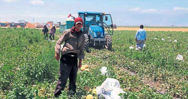 Kırıkhan'da kavunlar yağmura takıldı