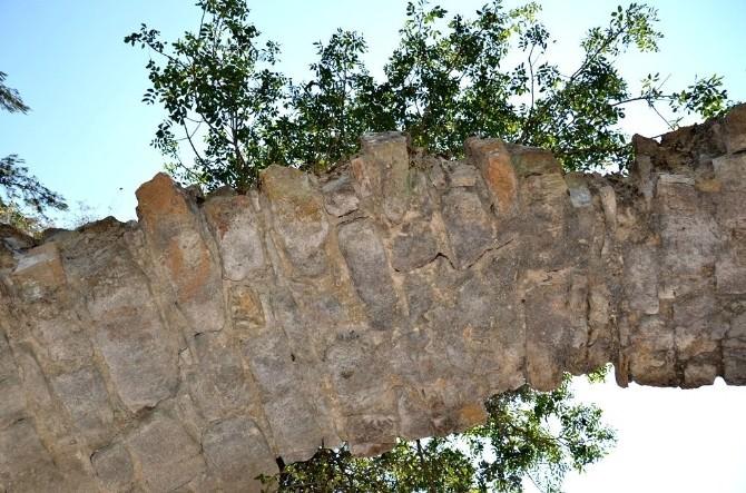 Tarihi Su Kemerinde Büyüyen Ağaç Şaşırtıyor