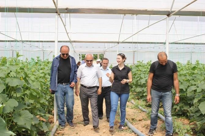 İl Müdürü Yılmaz İyi Tarım Uygulamaları Yapan Üreticileri Ziyaret Etti