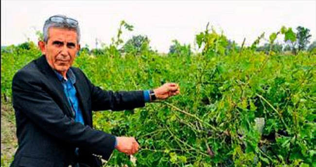 Manisa'da çiftçiye 35 milyon lira destek