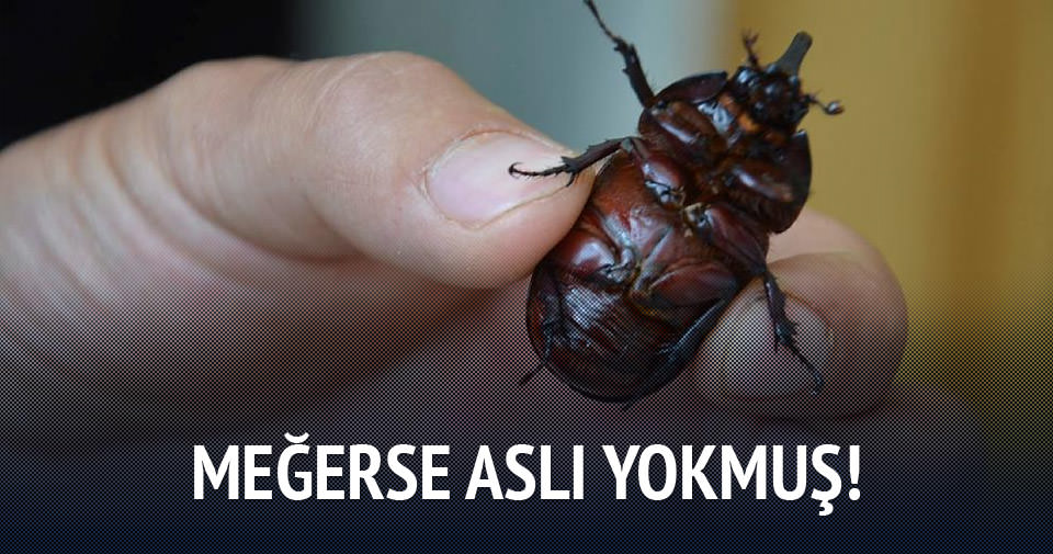 Gergedan böceği iddiaları asılsız!
