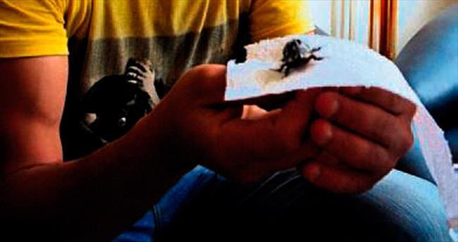 Sahibinden satılık gergedan böceği