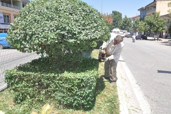 Gölbaşı Belediyesi Ağaçlara Şekil Veriyor