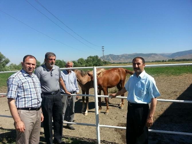 Muş'ta Buğday Ve Çiftlikler İncelendi