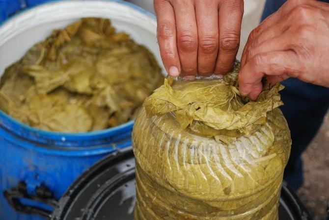 Tokat'ta Bağ Yaprağı Önemli Bir Pazar Oluşturuyor