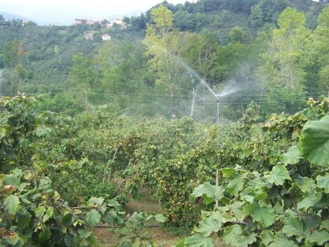 """UFK:fındık Bahçeleri Sulanmalı"""""""