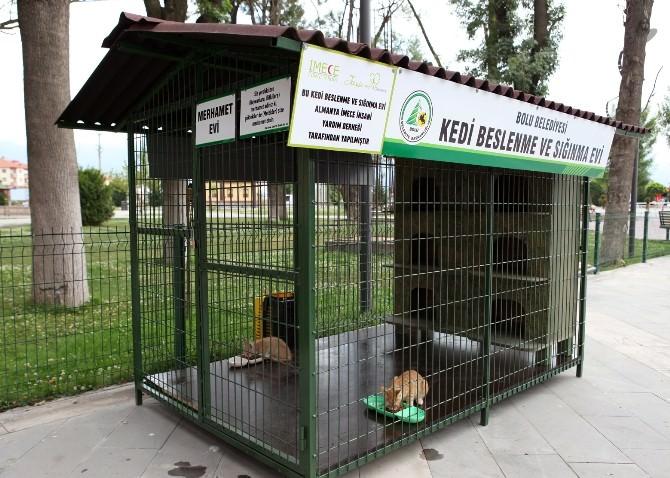 Bolu Belediyesi, Sokak Kedilerine Ve Kuşlara Yuva Yaptı