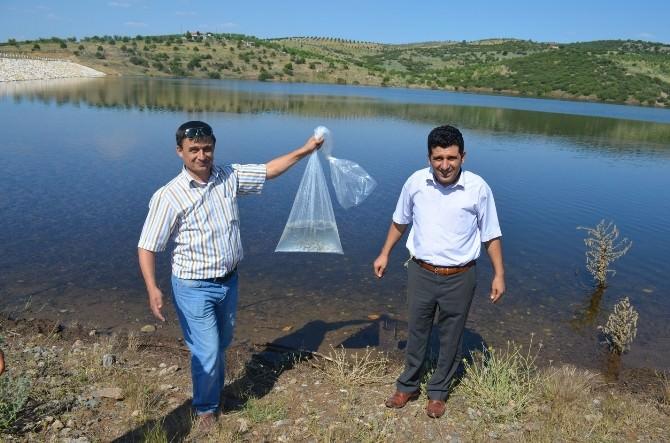 Çelengöz Göletine 2 Bin Adet Balık Bırakıldı