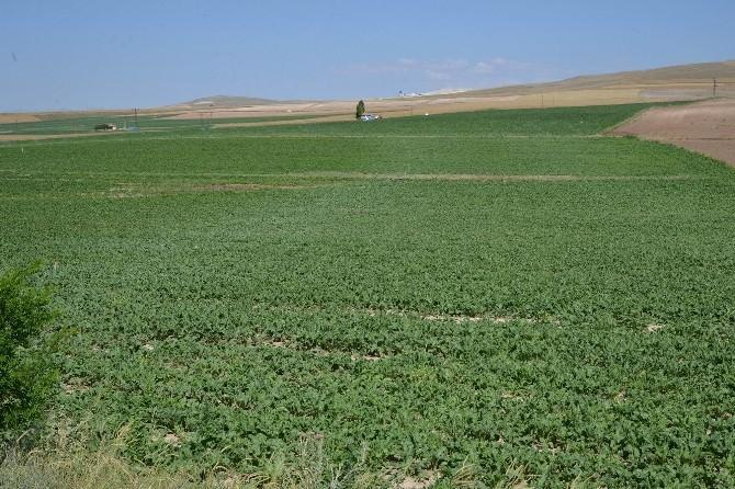 Kayseri Şeker Toprak Yılında Toprağı Koruma Seferberliği Başlattı