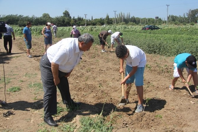 Burhaniye'de Öğrenciler Sebze Üretmeyi Öğreniyor