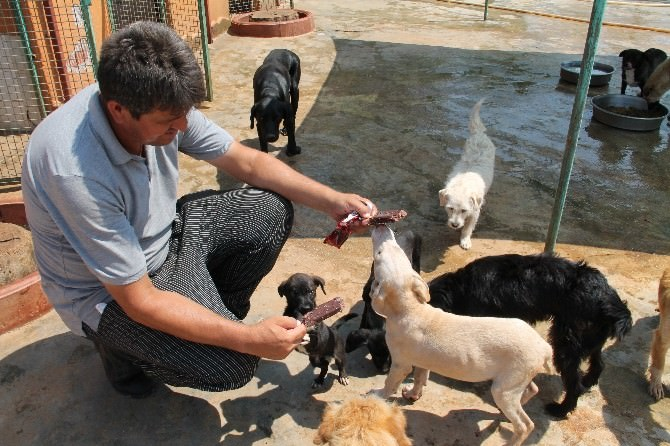 Sıcaktan Bunalan Köpeklere Önce Dondurma Sonra Duş