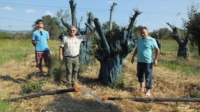 Edremitli Fidancı Anıtlatmış Zeytin Ağaçlarına Sahip Çıktı