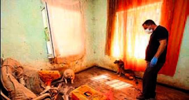 Hayvan dolu eve baskın düzenlendi