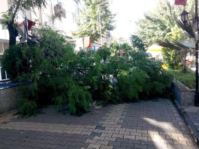 Devrilen Ağaç Caddeyi Kapattı