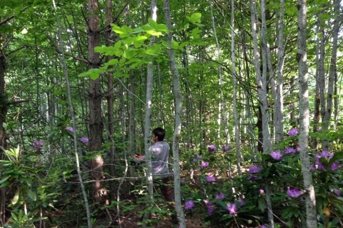 Gölyaka'da Ormanda Sıklık Bakımı Çalışmalarına Hız Verildi