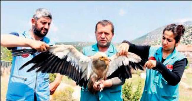 Akbabalar tedavi için Burdur'da