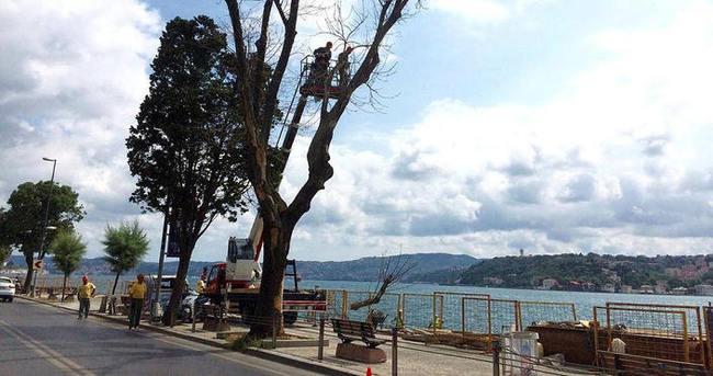 İBB'den ağaç kesimi açıklaması