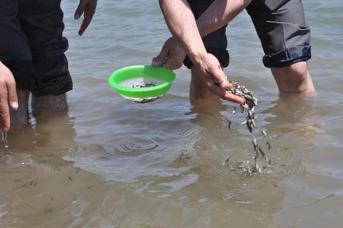 Muş'ta Göller Balıklandırıldı