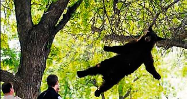 Kampustaki ağaca çıkan ayı kurtarıldı